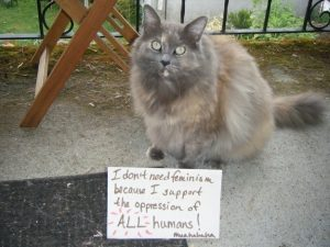Cats Against Feminsim 4